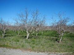 cienaga rd orchards