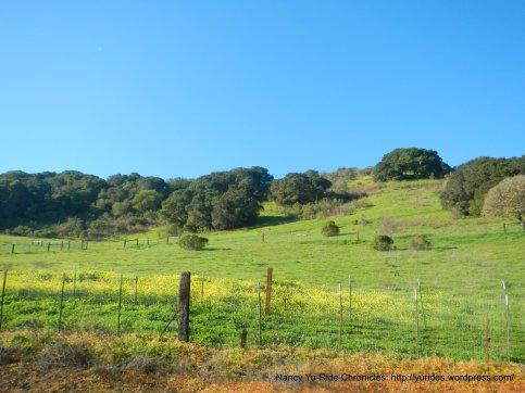 green-yellow meadows