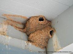 elkhorn slough birds nest