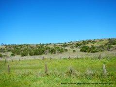 elkhorn rd landscape