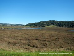 wetlands and marshes