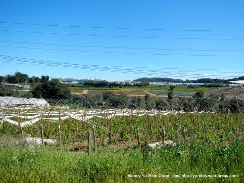tarpey rd farmlands