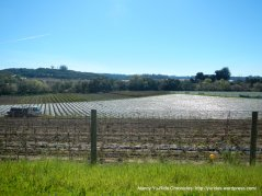 strawberry fields-tarpey rd