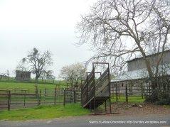 McEwen Rd cattle pen