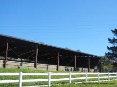 bear creek horse ranch
