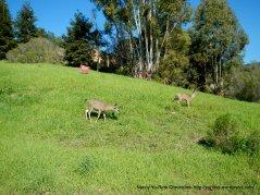 deer hill rd