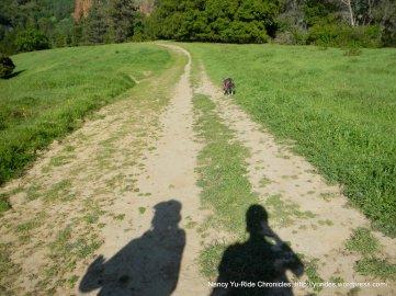 pine tree trail