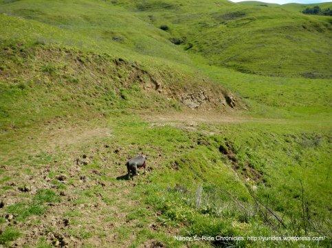 santos trail