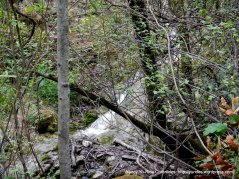 falls trail-creek