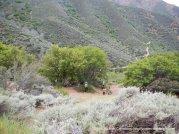 cardinet oak rd