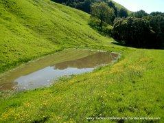 periera trail stock pond