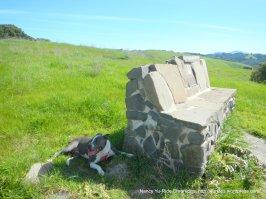 ivan dickson memorial bench