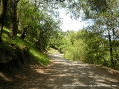 old briones rd trail