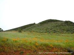 diablo landscape-poppies