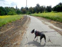 path along morello ave