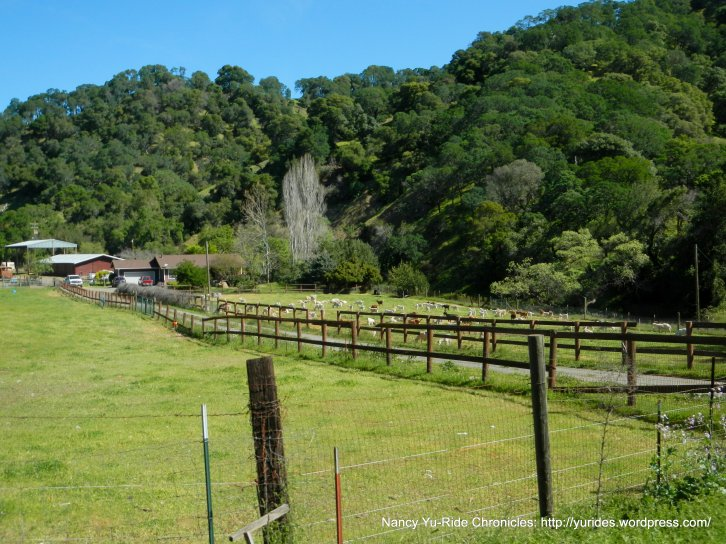 wooden valley ranch