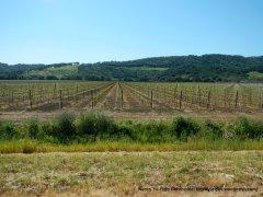 suisun valley vineyards