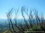 summit trail views