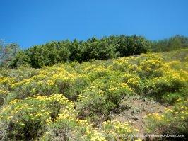prospectors gap rd flowers