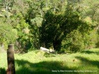 old donner cabin site