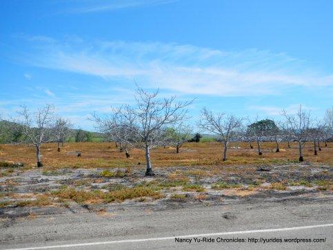 morgan territory rd orchard