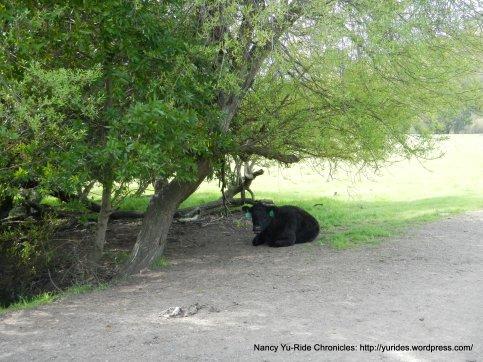 cattle grazing area