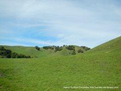 green rolling hills