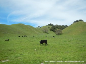 open cattle grazing area
