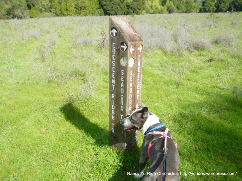 continue on Crescent ridge trail