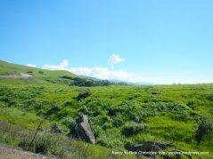 sierra rd landscape