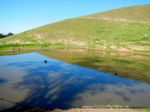 sierra rd pond