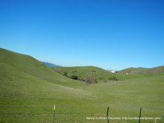 los buellis hills