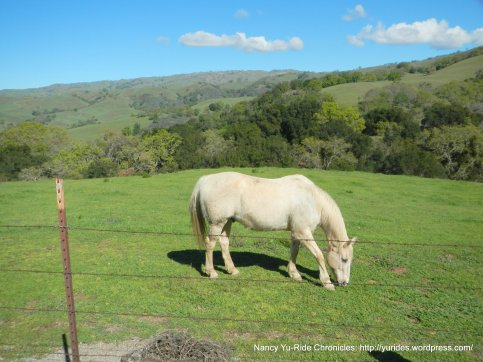 felter rd ranch
