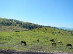 felter rd-los buellis hills