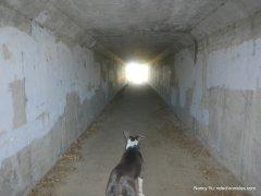 tunnel crossing