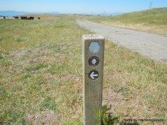 bay area ridge trail/sky trail