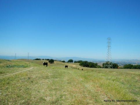 bay area ridge trail/sky trai