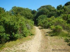 wood rat trail