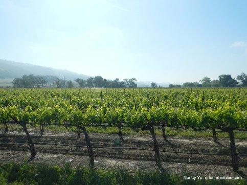 alexander valley