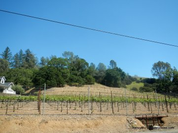 hillside vineyards