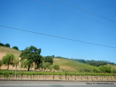 rolling vineyards