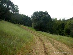 morgan creek rd