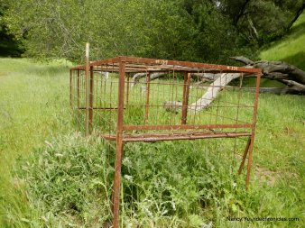 riggs canyon rd-pig trap
