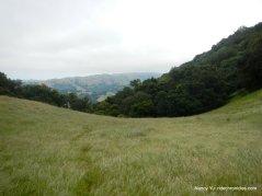 grassy slope
