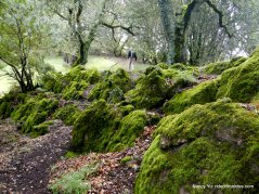moss covered rock wall