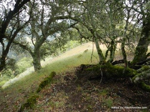 head east along ridge