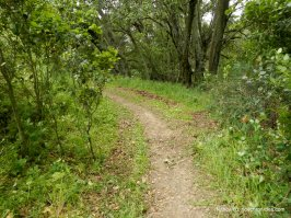 oyster point trail