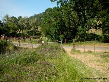 morgan territory trail head