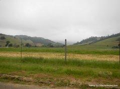 nicasio valley