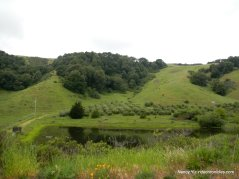 wilson hill pond